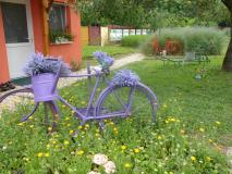 Stimmung im Kräutergarten